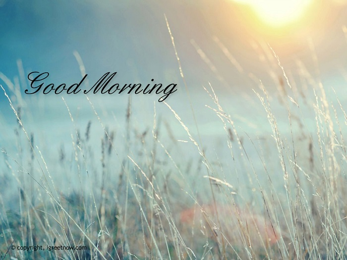 Morning Nature